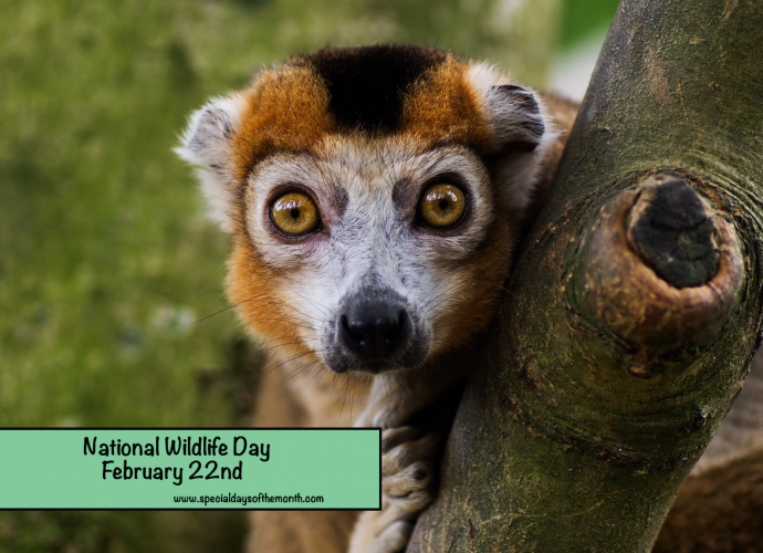 'national wildlife day is february 22nd'