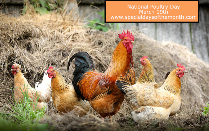 """""""national poultry day"""""""