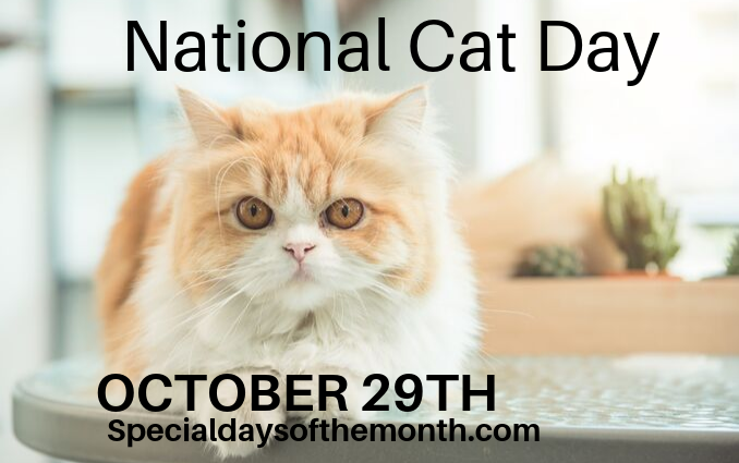 """national cat day"""